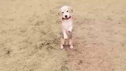 Смотреть Как псина ловит мячик