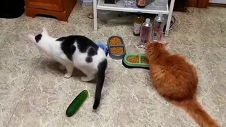 Смотреть Как кошки огурцов боятся