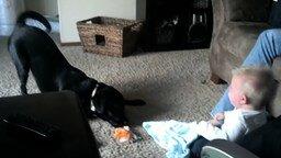 Смотреть Пёс играет с ребёнком