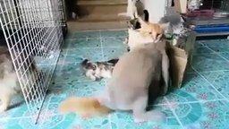 Кролик достаёт кошку