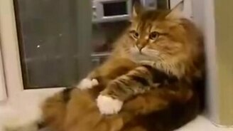 Самомассаж котяры смотреть видео прикол - 0:50
