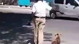 Полицейский помогает собаке-пешеходу смотреть видео прикол - 0:42