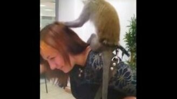 Смотреть Ловкая обезьяна и стеснительная девушка