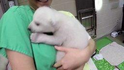 Смотреть Первые три месяца жизни белого медведя