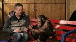 Смотреть Шимпанзе и планшет
