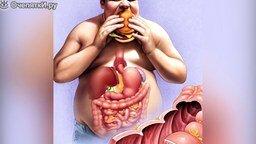 Смотреть Зачем нам кишечник?