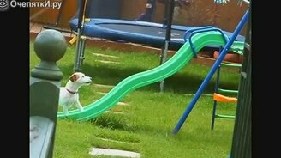 Смотреть Самые смешные собаки