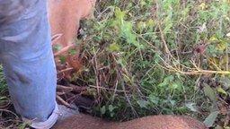 Смотреть Спас двух оленей-драчунов