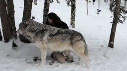 Девушка и ручной волк смотреть видео прикол - 1:17