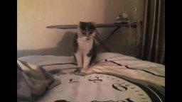 Смотреть Кошка против простыни
