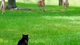 Смотреть Кот разгоняет оленей