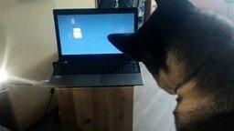 Смотреть Собака смотрит кино
