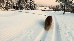 Смотреть Кот тянет лыжницу