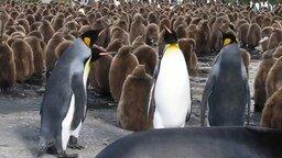 Смотреть Весёлые пингвины