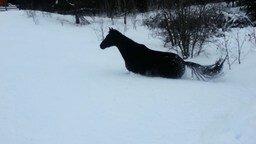 Смотреть Лошадь преодолевает сугробы