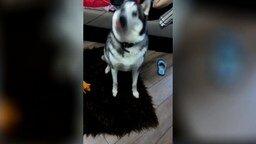 Собака и газировка