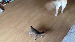 Смотреть Собака играет с котёнком