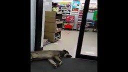 Смотреть Смертельно уставший пёс перед дверью