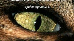 Смотреть Почему нельзя смотреть в глаза кошке?