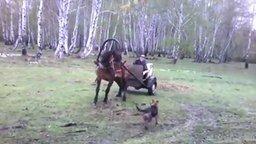 Смотреть Лихой дрифт на лошади