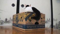 Смотреть Котики и коробки