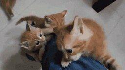 Кошачья милота смотреть видео прикол - 1:20