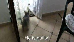 Псина гоняет кошку смотреть видео прикол - 0:43