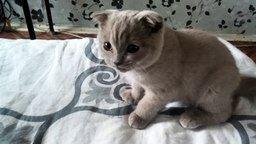 Котёнок реагирует на скотч