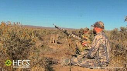 Смотреть Рысь против охотников