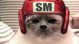 Смотреть Коты боксируют!
