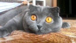 Смотреть Работа кошачьих зрачков