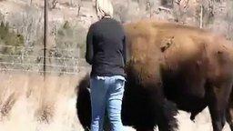 Курица и буйвол смотреть видео прикол - 0:34
