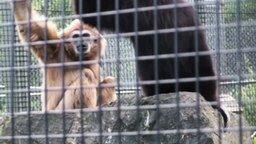 Смотреть Ловко заткнул обезьяну