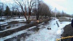 Собака и радиомашинка смотреть видео прикол - 0:26