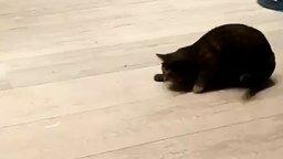 Кошка на задней передаче смотреть видео прикол - 0:13