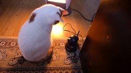 Видеонаблюдение за собственным котом