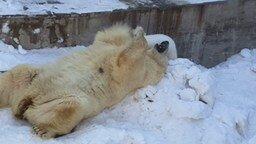 Смотреть Медвежонок и его мамашка