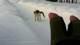 Смотреть Этот котик может быть опасен...