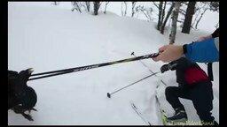 Глухарь распугал лыжников смотреть видео прикол - 0:46