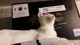 Смотреть Как звучит кошачий язык