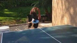 Смотреть Пёс играет в пинг-понг