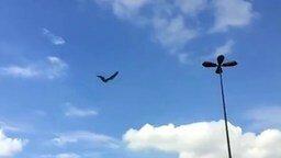 Смотреть Летающая механическая птица