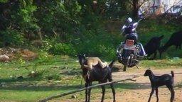 Смотреть Как обезьяна к козе прилипла