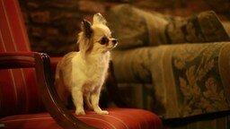 Смотреть Умненькая собачка