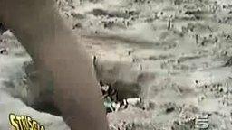 Пляжные приколы смотреть видео прикол - 1:19