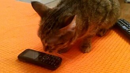Кошке стало стыдно смотреть видео прикол - 0:51