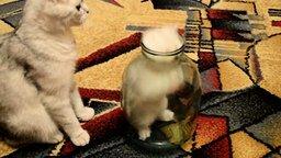Сбой программы у котёнка смотреть видео прикол - 1:05
