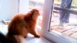 Кошка защищает свой дом от штукатура смотреть видео прикол - 0:37