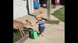 Смотреть Ребёнок и оленёнок