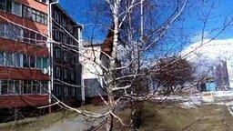 Собака влезла на дерево за кошкой